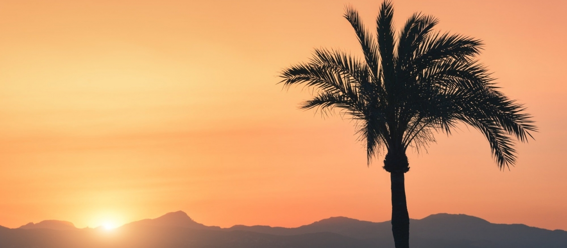 Silhouettes of palm trees against colorful sky at sunset. Tropical landscape with palms on the sandy beach, sea, gold sunlight in the evening in summer in Mallorca, Spain. Vintage tone. Nature